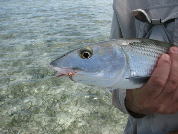 Bonefish Close Up