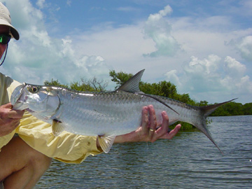 Cancun Tarpon Fishing